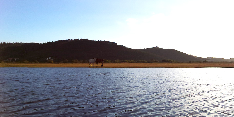 Great Brak River - view from river
